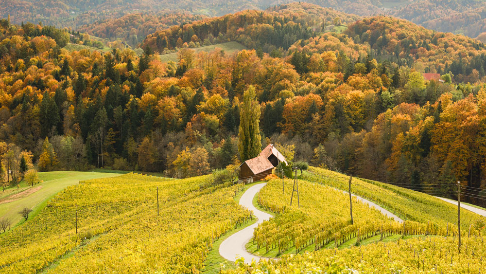 The road that love built in Slovenia's wine region, just north of Maribor.
