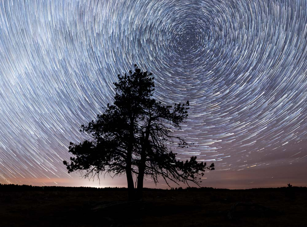 Star trails above a lone tree in Cyrpess Hills Provincial Park in Southern Alberta